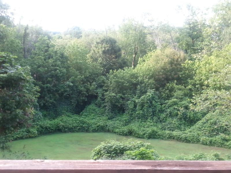 Beautiful view of nature. Take in the view & hear the creek running