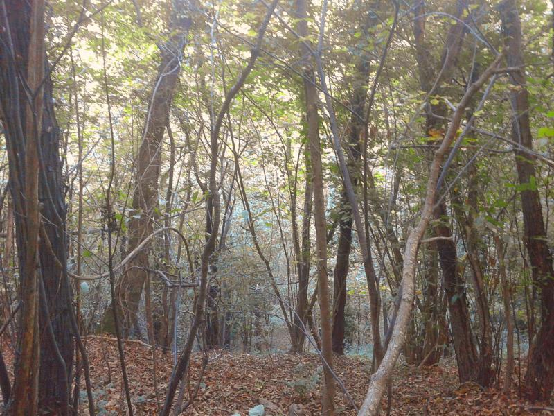 Bosque de castañas en otoño