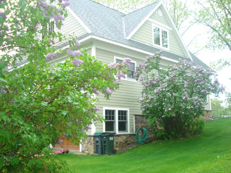 Lilacs in May on North facing side of home.