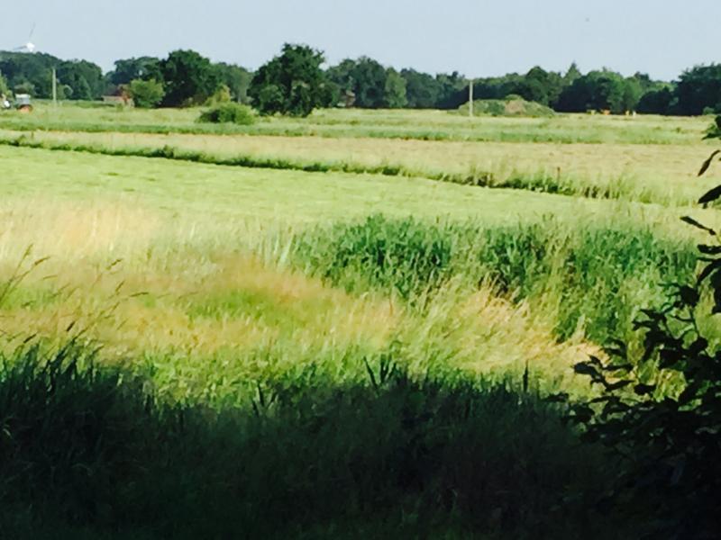 Rad-und Wanderweg direkt am Haus mit Wiesen und Feldern