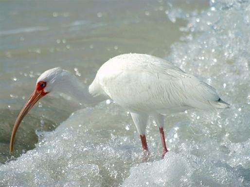Sanibel Island's wildlife reserves