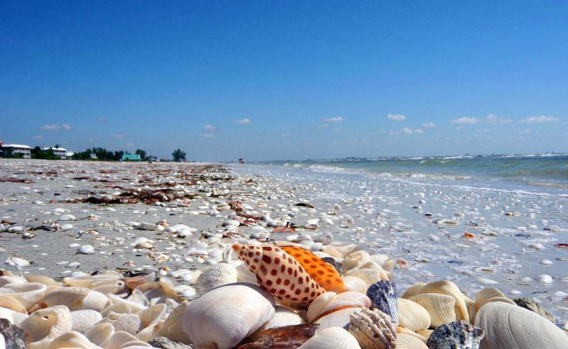 Sanibel island's World famous shelling beaches