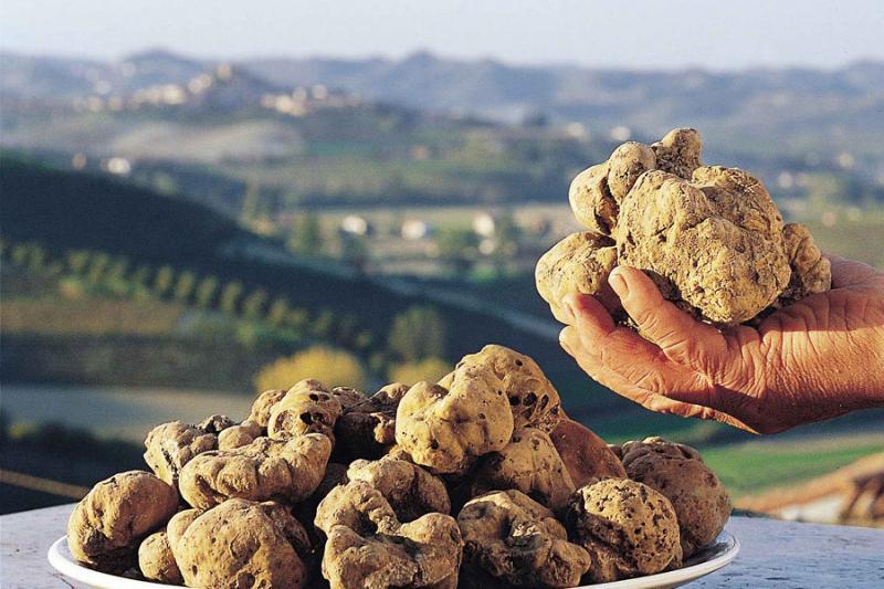White Truffles from Langhe. Taste it at International White Truffle in Alba (Fiera del Tartufo)