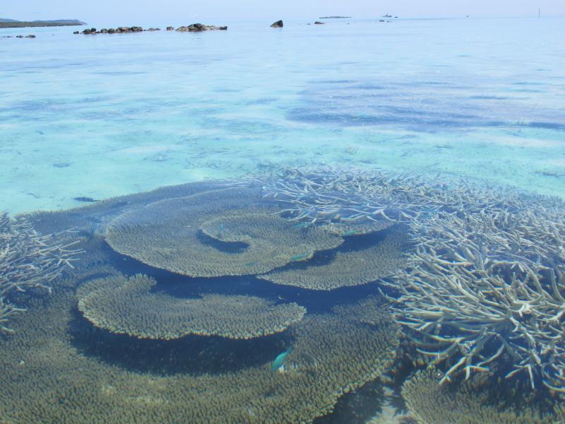 Parches de coral hermosos para explorar