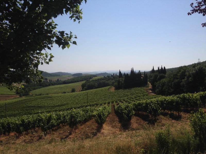 Vineyards and plenty of good wine to taste!