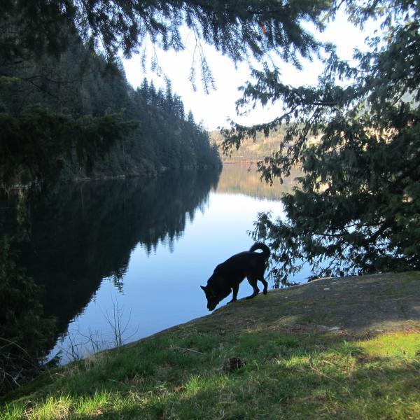 Sumi en el extremo del lago