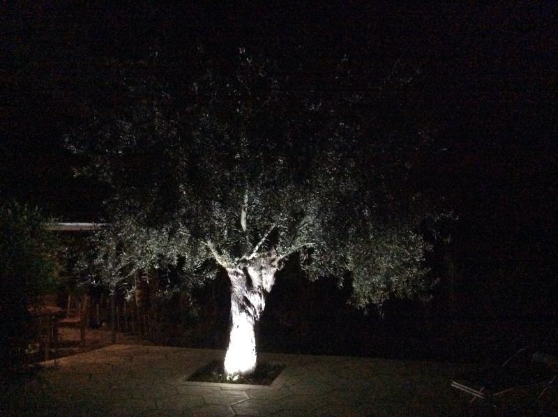 Olive Garden Holiday Homes 2, alquiler de vacaciones en Lapta