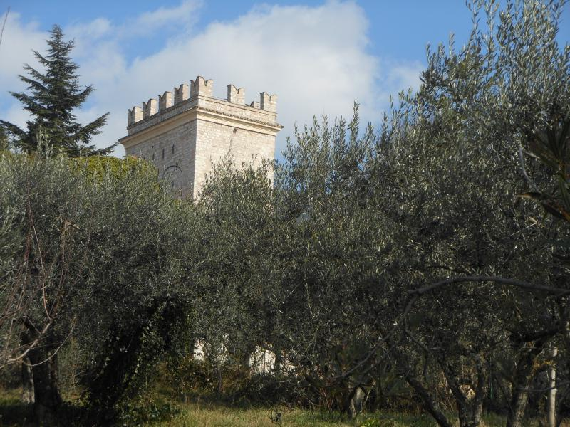 Our olive grove and the tower of Porta nuova, main gate of the old Assisi center