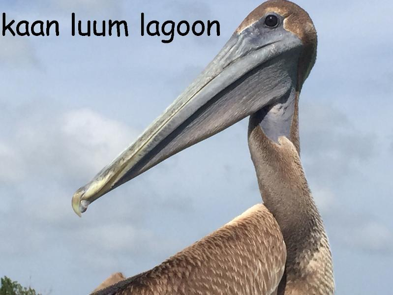 Interact with the pelicans at Lagoon only minutes fro tnme apartment