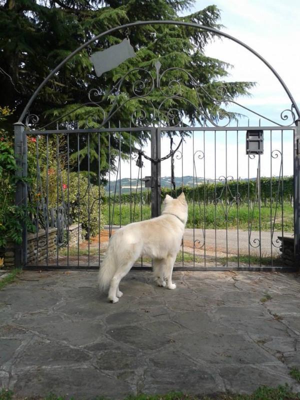 Pets are allowed. Gli animali sono i benvenuti.