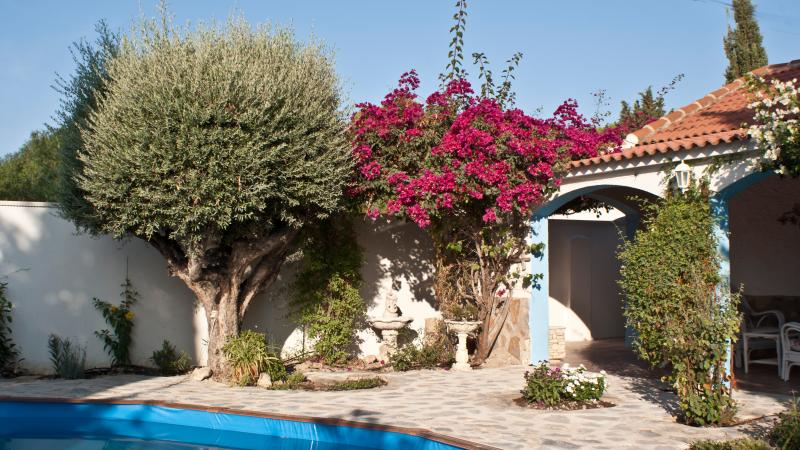 Garden & Pool leading off veranda, Lovely tree and Bougainvillea