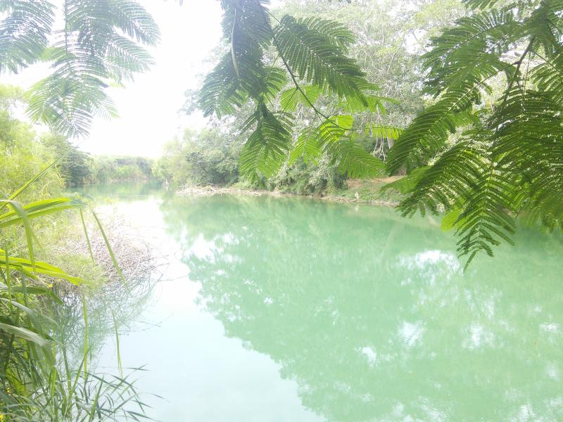Calm emerald waters of the Mopan river at Moe's Place