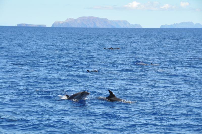 Dolphins near the coast.