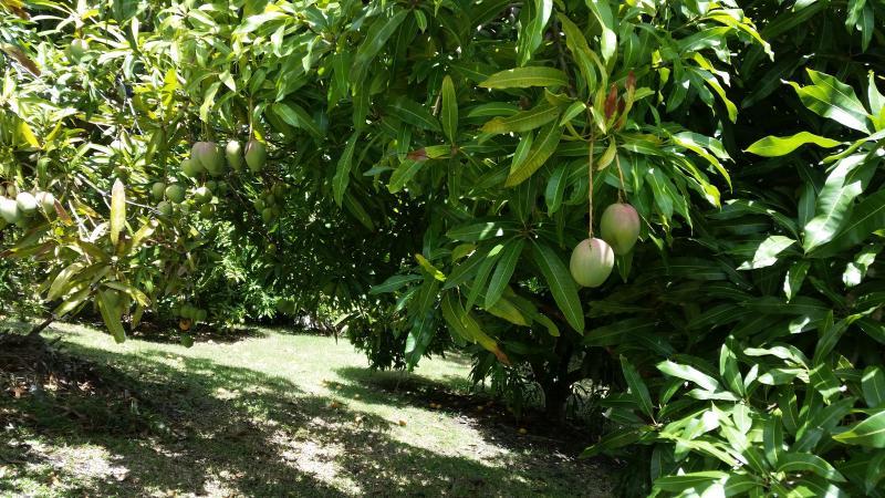 Jardim com frutos maduros