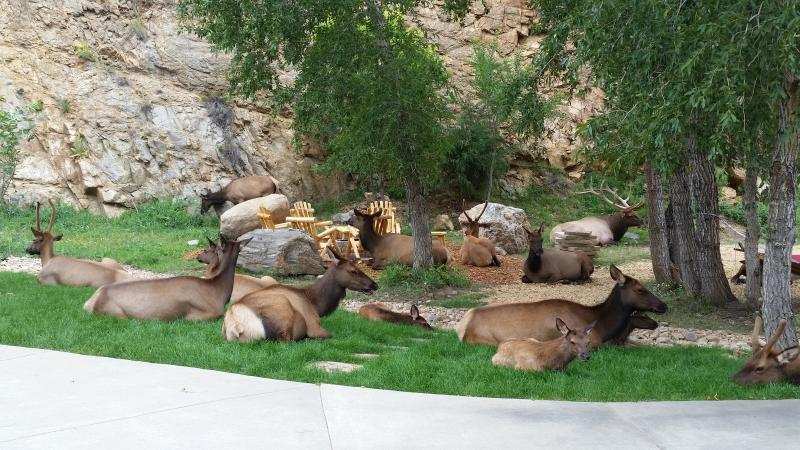 Elk hanging out in the park