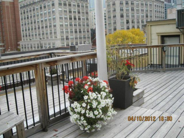 Roof Garden - facing city