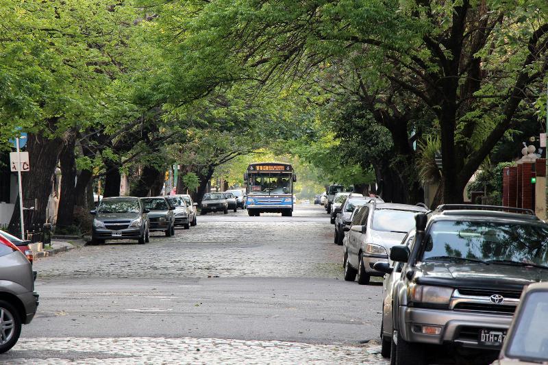 Calm trees in Belgrano R.