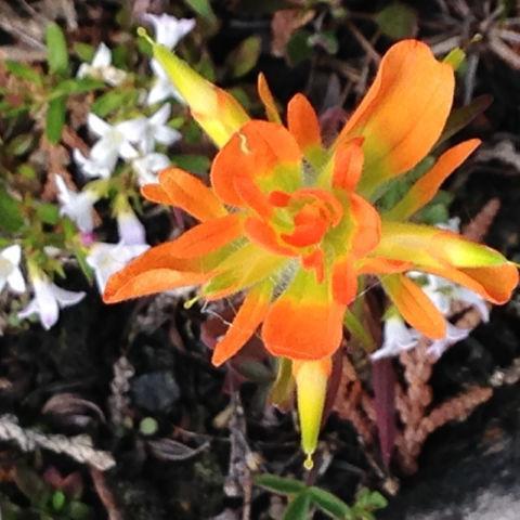 flores silvestres raras