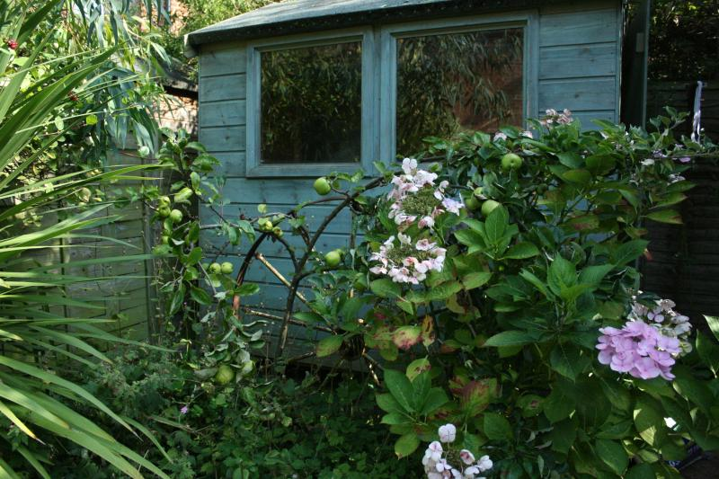 Private secluded garden with fruit trees and herb garden
