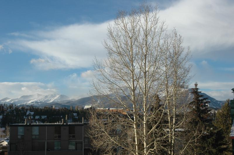 Aspens from living room.