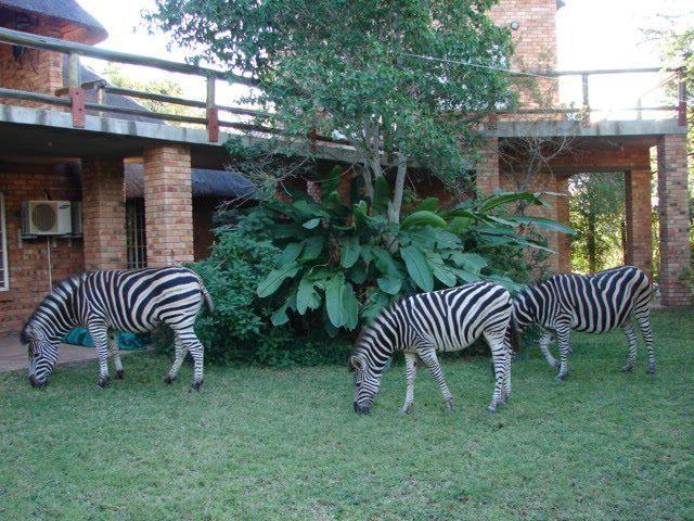 Marloth Lodge in Marloth park, vacation rental in Malelane
