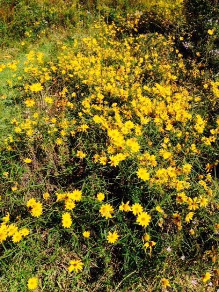 Wildflower Meadow at Little River Bluffs