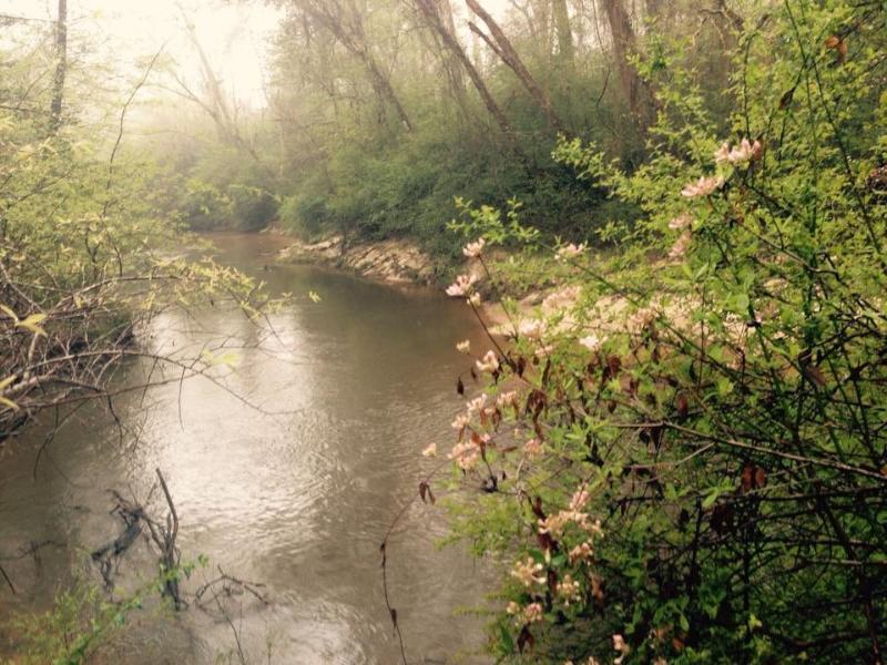 Wild Azaleas on the River Banks