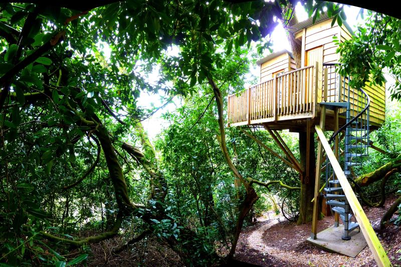 The Nest Tree House, holiday rental in Honiton