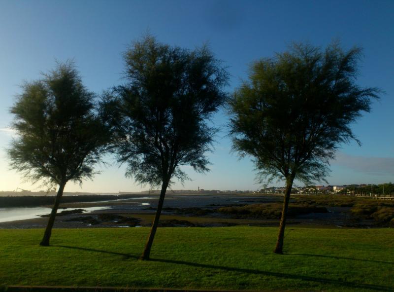 The Marina Lawns