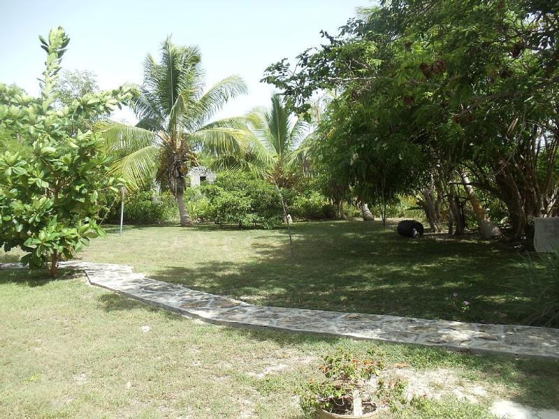 Patio lateral con arboles frutales y palmas de coco