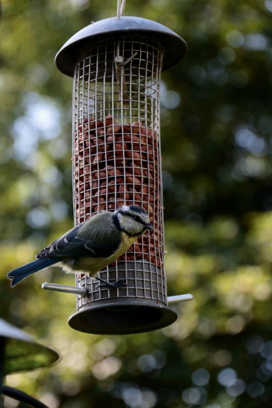Sit and watch the birds feeding - a blue tit caught on film by one of our guests - Alistair McGarva