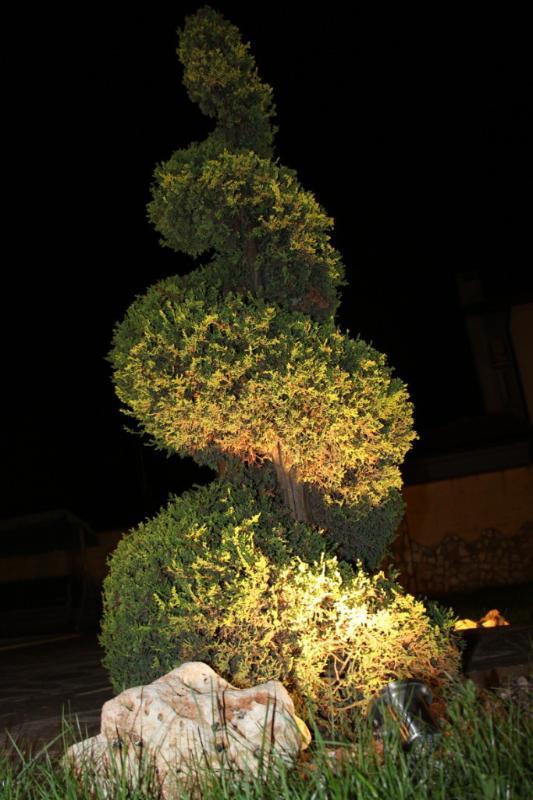 arbre Corkscew nuit impression
