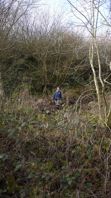 Exploring the hillside garden in Autumn