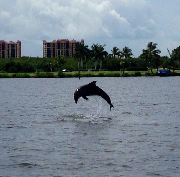 Spelen dolfijn op Tarpon punt aprox. 15 min afstand