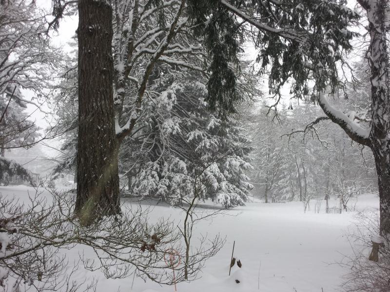 Rare hiver neige recouvre la back yard