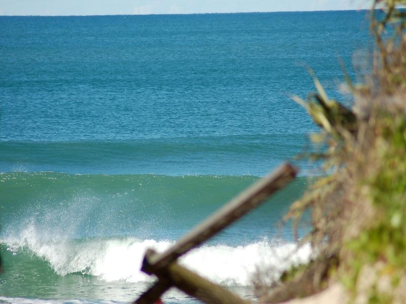 Tallow surf ... spot the dolphins