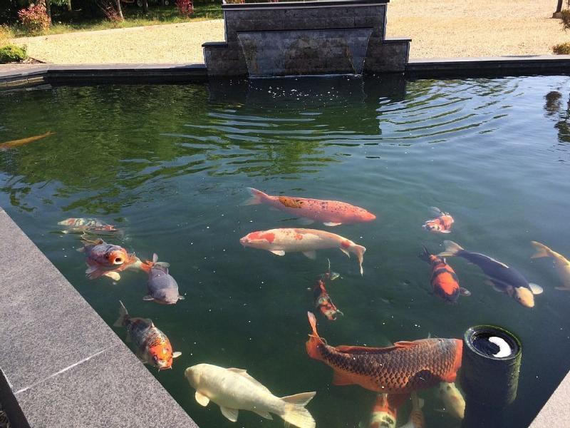 Sitzen Sie und hören Sie die Gewässer und beobachten Sie die Fische schwimmen in 1 von 3 Teichen