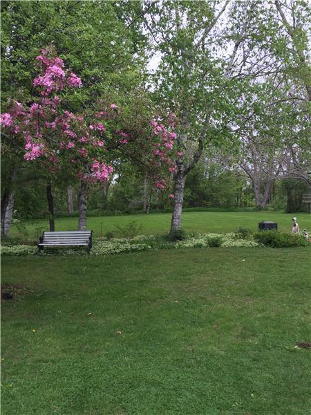 view of large backyard