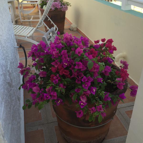 ISABELA BEACH COURT, vacation rental in Isabela