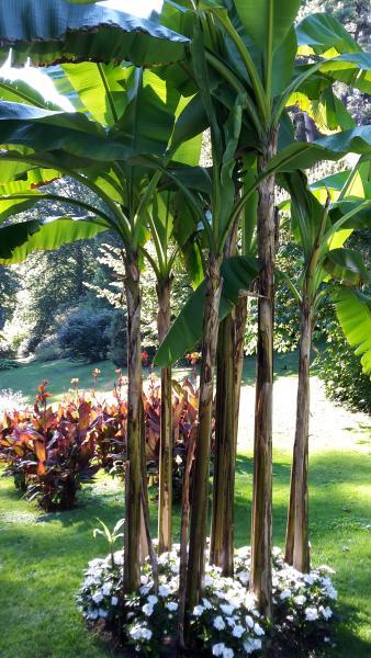En 2020, le Salon fédéral de l'horticulture aura lieu à Überlingen. Réservation déjà possible.