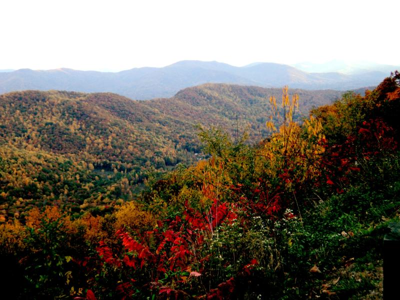 Fall colors here in Asheville.