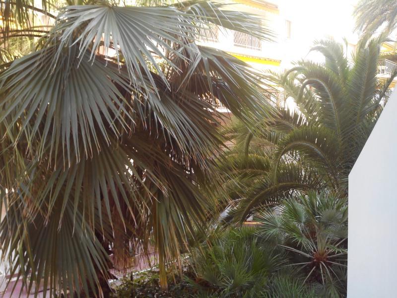 palmboom voor het terras