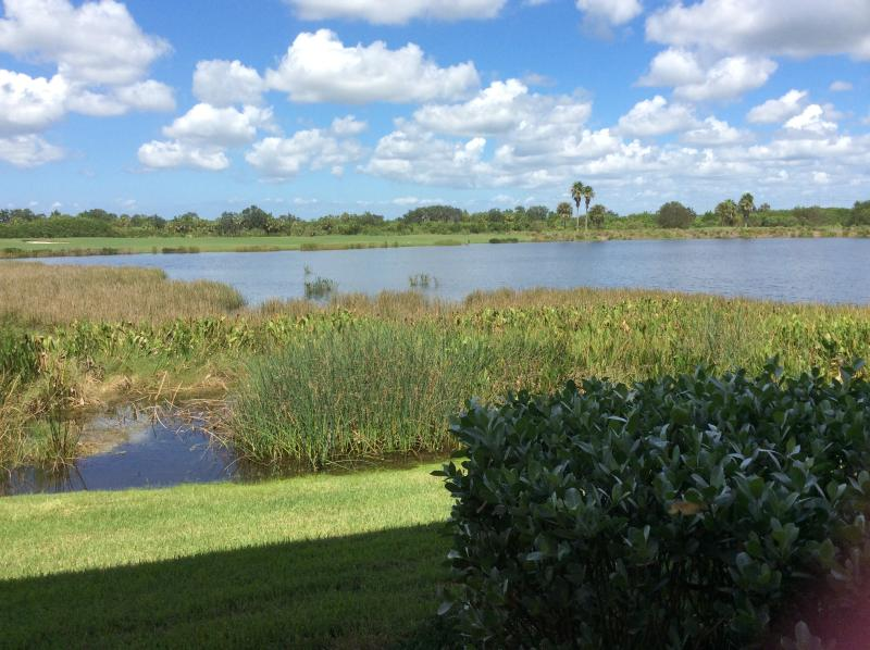 view from condo from Lanai. Many species of birds on lake. Golf course across lake