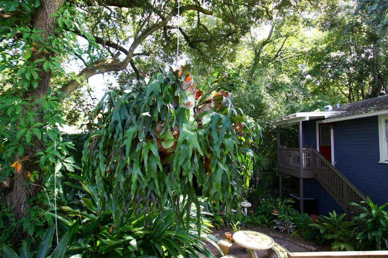 Bert, our large stag-horn fern, greets you a the back entrance.