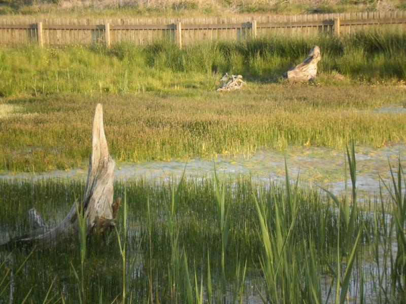 Southerness cottage rental - Toad & Newt Pond