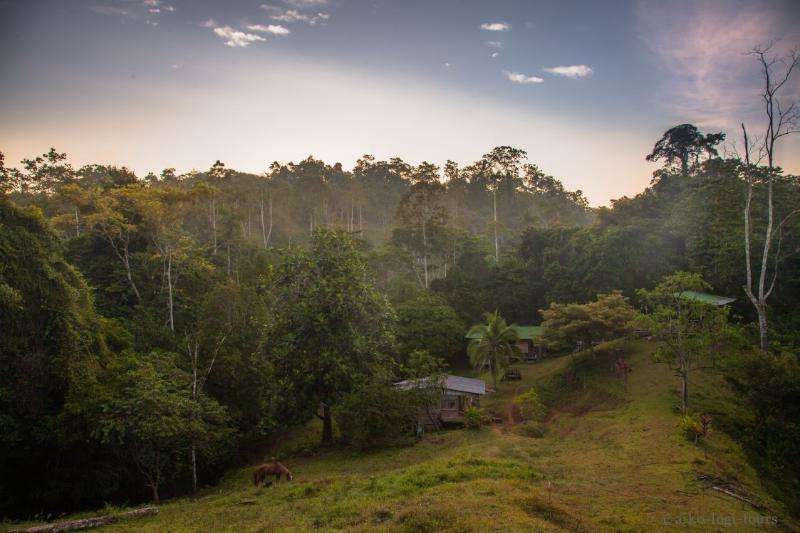 135ha Private Rainforest - Retreat Into Nature, holiday rental in Hone Creek
