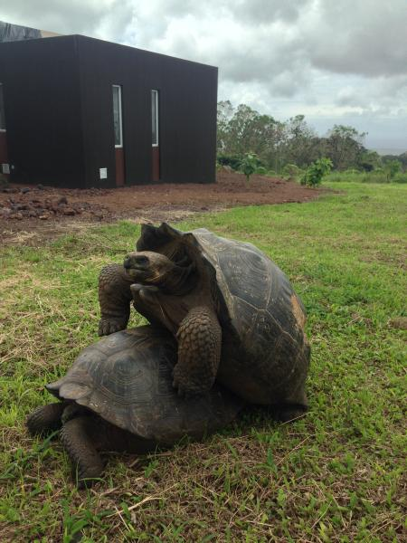 Tortoises at the property. No need to go to visitor sites to see them.
