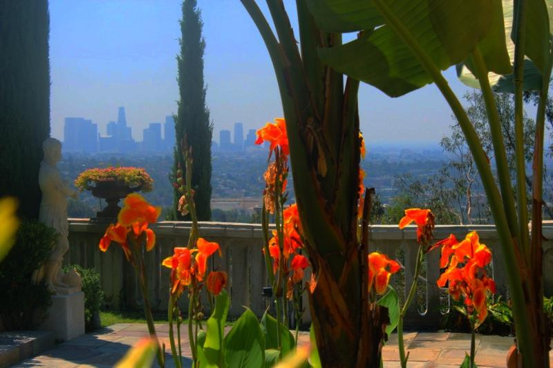 Vue du centre-ville de Los Angeles horizon à travers les fleurs canna floraison