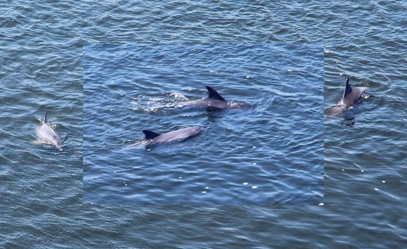Dolphins watching or swimming with dolphins all year round