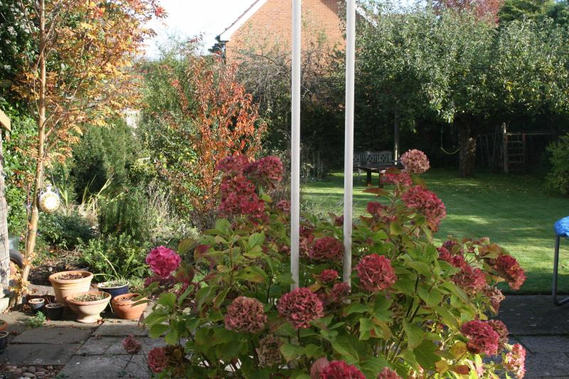 The back garden in the autumn.